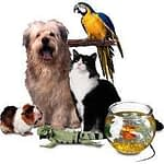 Protect your pet with pet insurance while on the road